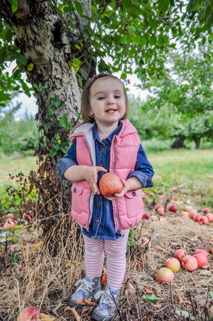 apples-30
