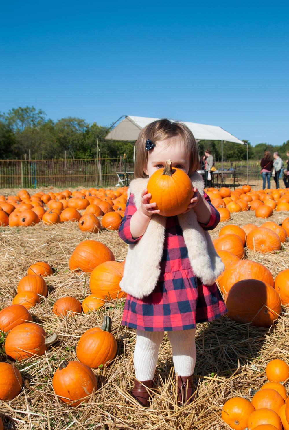 pumpkins-24