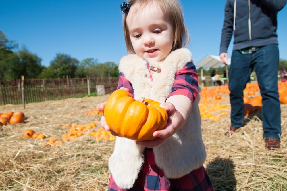 pumpkins-35