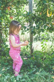 apples-36