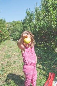 apples-42