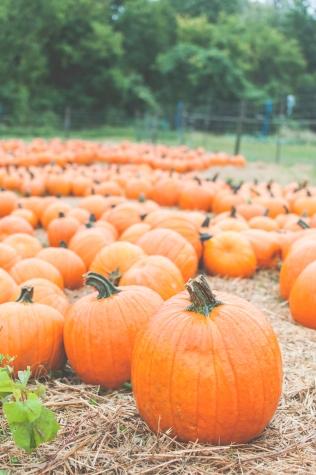 pumpkins-14